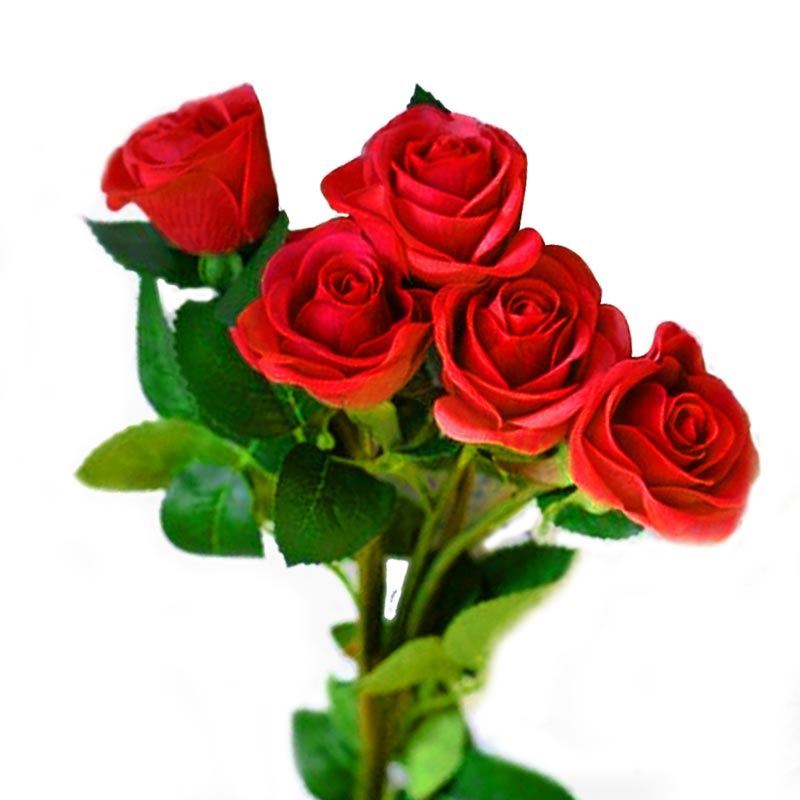 5 Red Roses